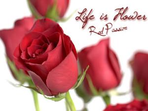 Consegna fiori a domicilio: banner rose rosse