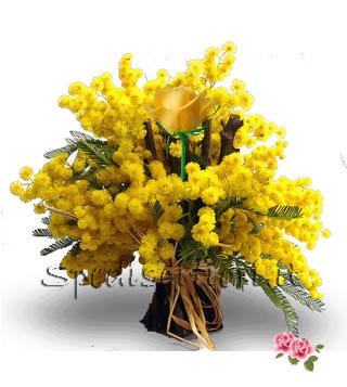 una-rosa-gialla-con-mimosa
