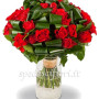 bouquet-di-roselline-rosse